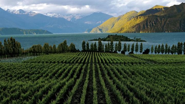 wine-regions-in-new-zealand krydstogter