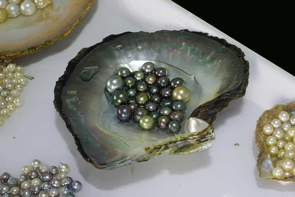pearl production in Halong Bay