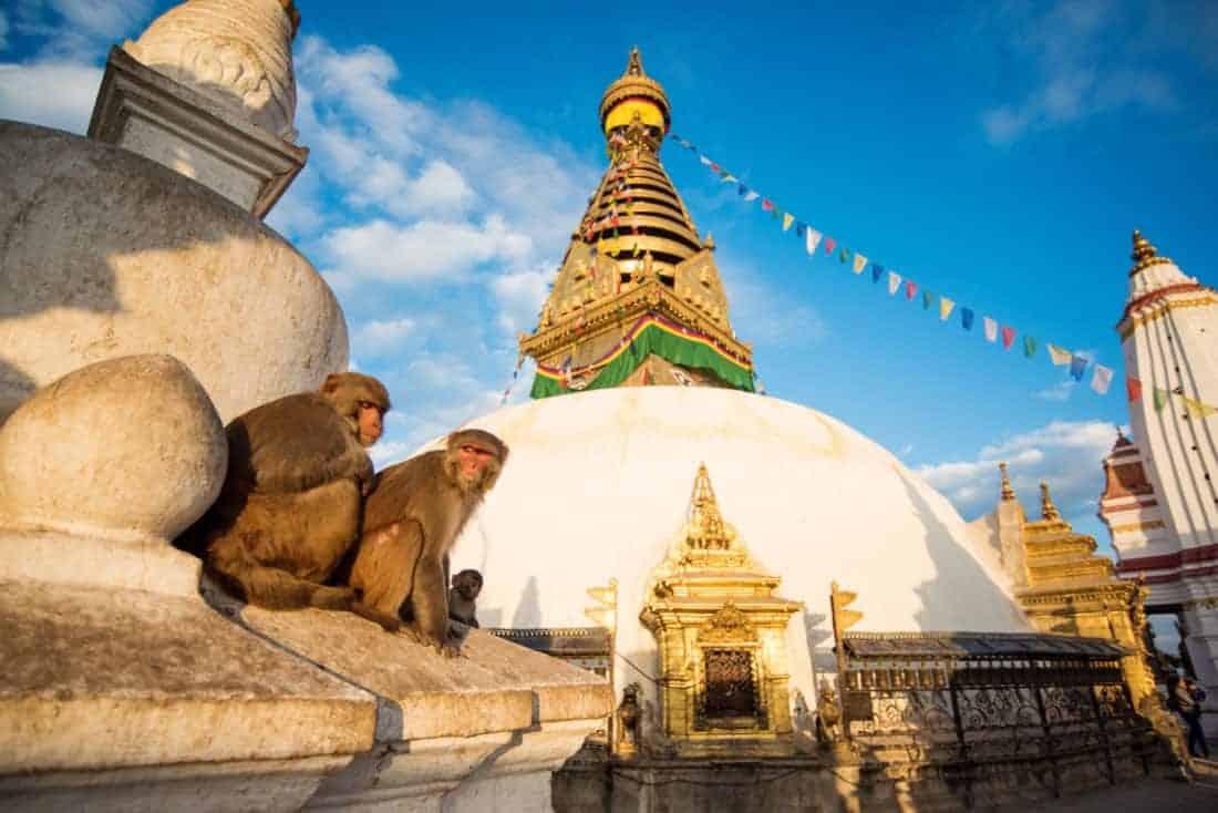 Kathmandu tempel med aber