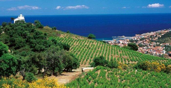 Languedoc-vinproduktion-helt-ned-til-havet