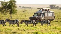 Tanzania-safari-efter-zebra