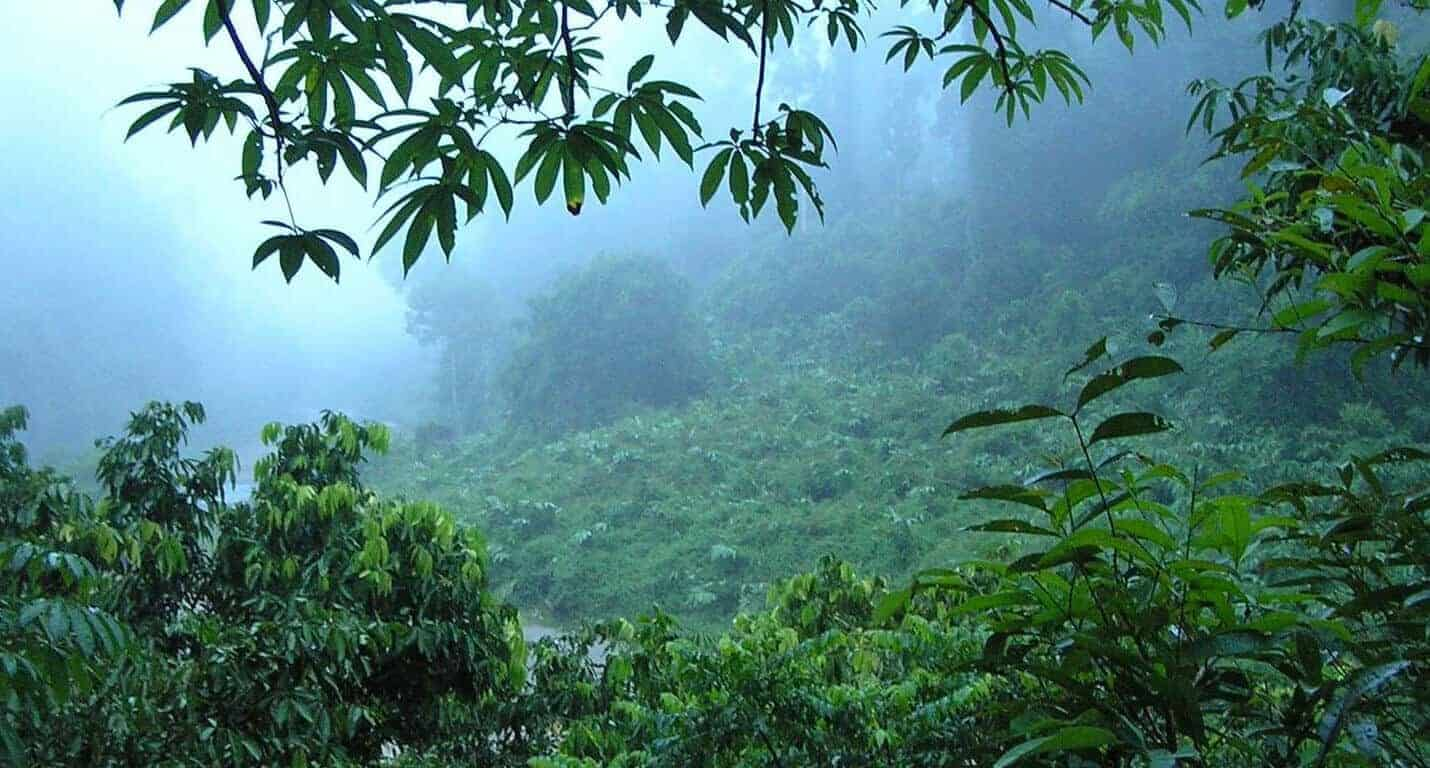 Borneo med noget af verdens sidste uberørte jungle