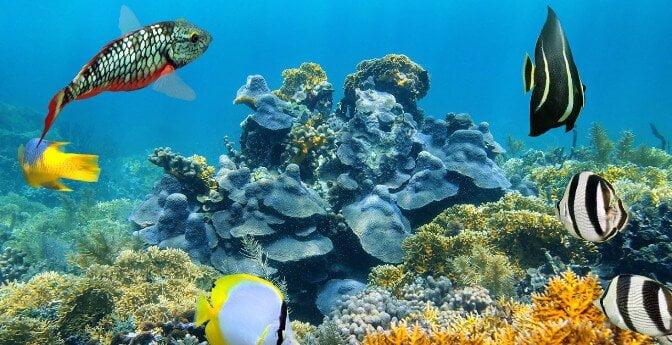 Belize diving.jpeg