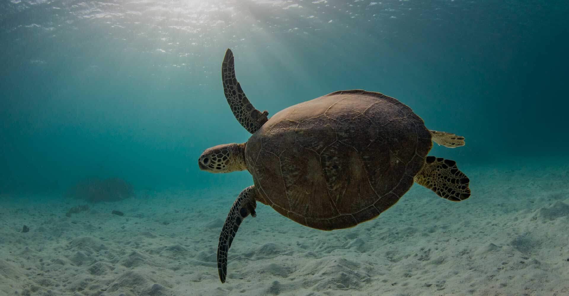 Havskildpadder ved Kap Verde, dem kan vi ikek blive trætte af