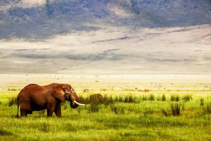 Tanzania savanne
