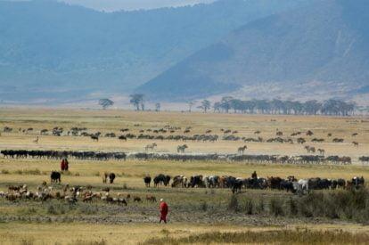 Rejser til afrika. Ngorongoro krateret rummer en overflod af vilde dyr på et overskueligt areal i Tanzania