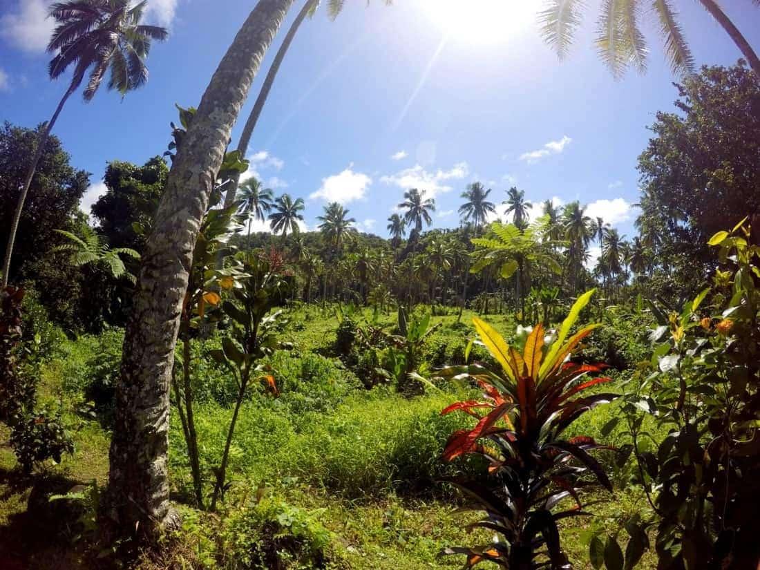 Taveuni Island, Fiji. 1