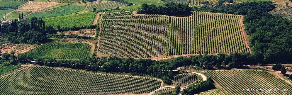 Altesino, vinmarker. Brunello di Montalcino
