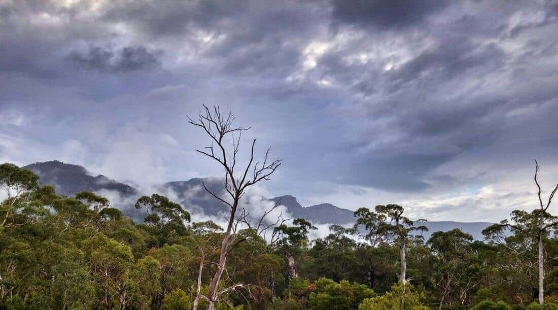 Beautiful green forest in the Grampians mountains in Australia.