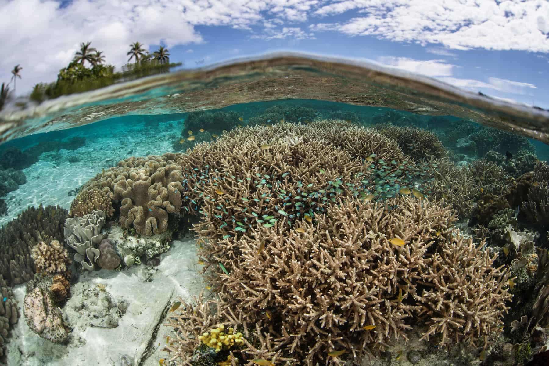 Melanesien, koralrevMelanesien, koralrev