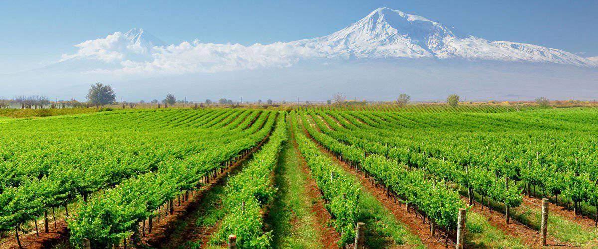 koof Armenia wine