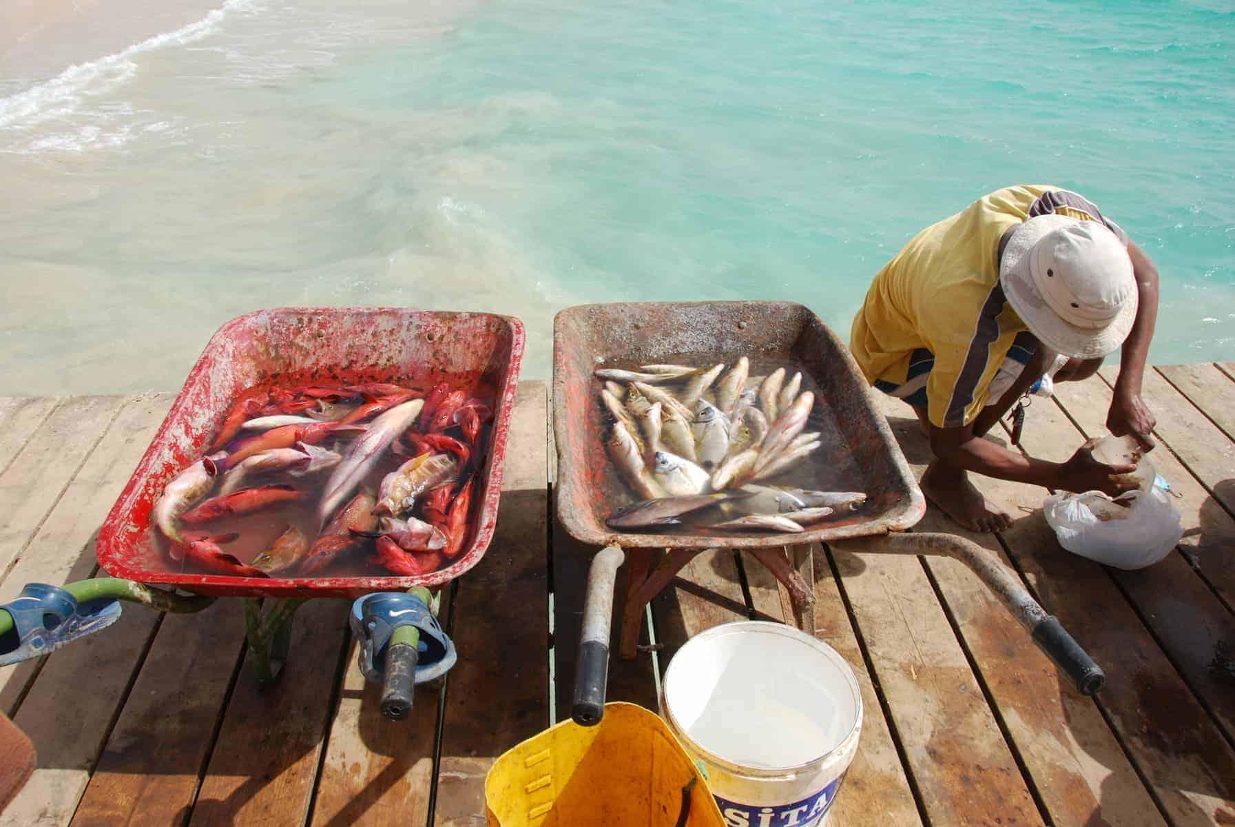 Kap Verde byder på helt frisk og lækker sea-food