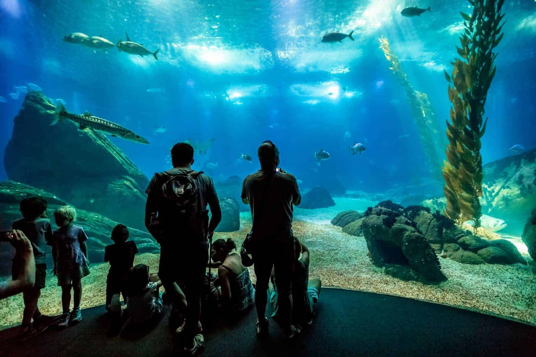 Lisbon, Portugal - August 24, 2017: family watching scenic central tank of Lisbon Oceanarium, in Parque das Nacoes, one of the largest aquarium in the world. Tourism, holidays and leisure concept.
