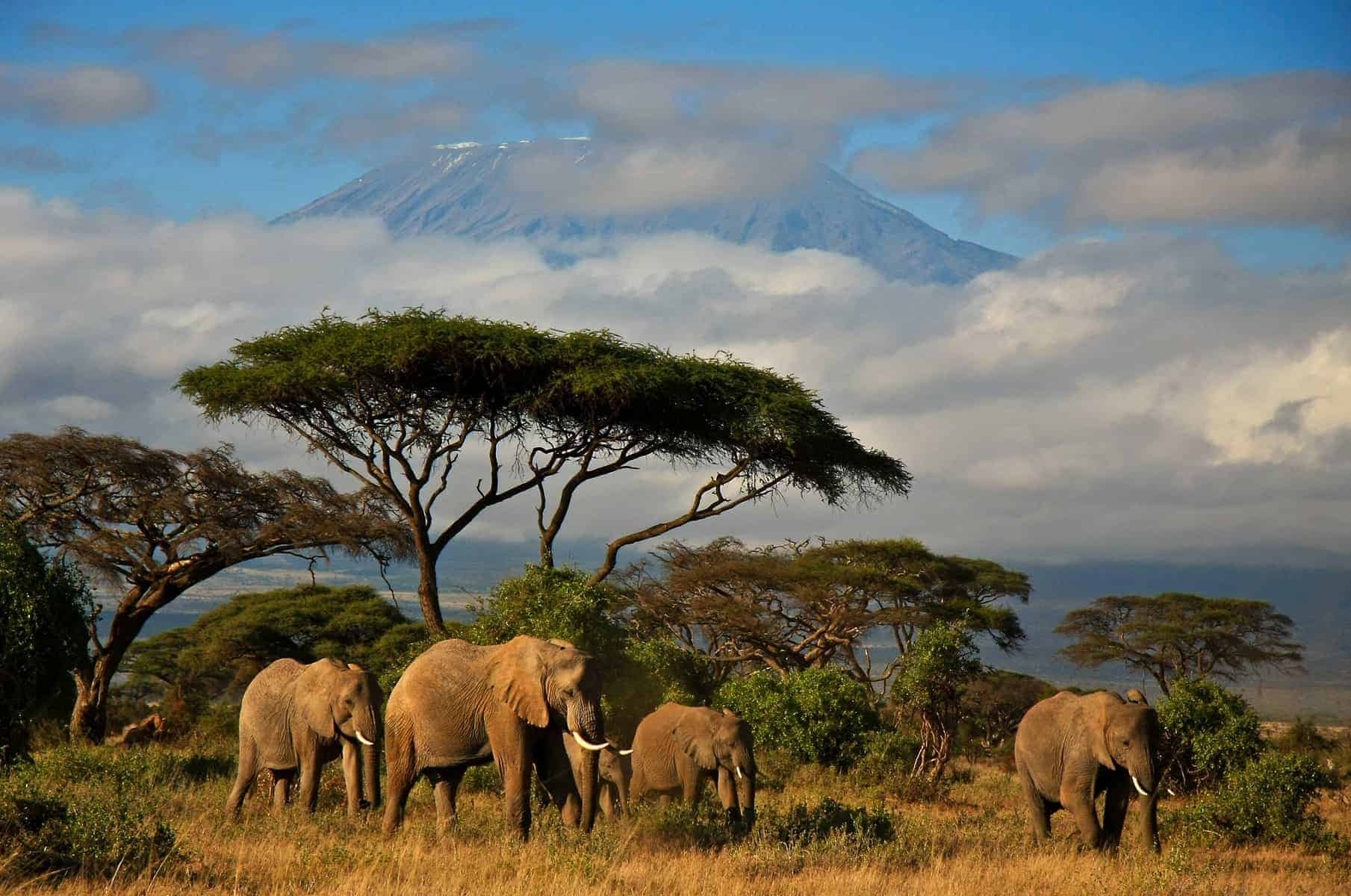 An elephant family walking in front of Mt. Kilimanjaro