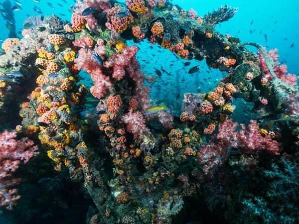 Igara-Wreck, diving Indonesia