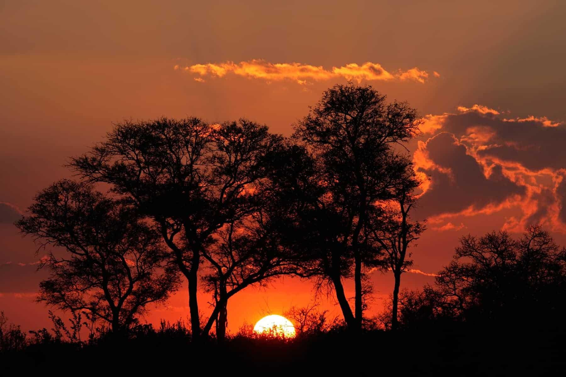 Safari i Sydafrika, Krüger Savanna sunset