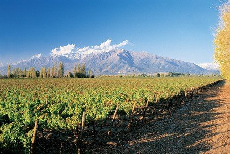 Wineyard in Maipo Valley Chile