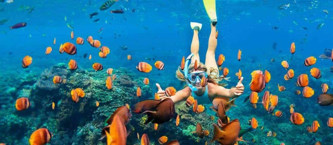 Mayonne, Koralfisk